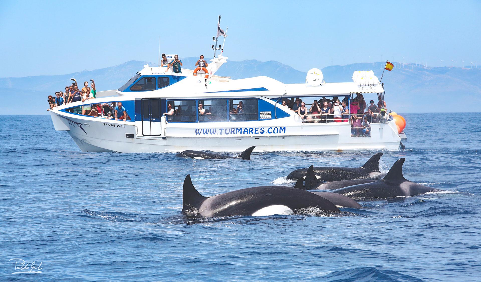 orcas en el estrecho